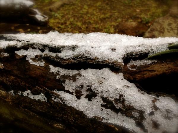 函南町に雪